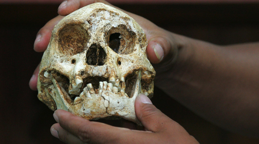 The characteristically small skull of the Homo floresiensis © Beawiharta