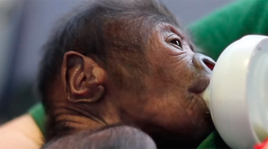 Rare gorilla c-section at UK zoo leads to adorable, must-watch video