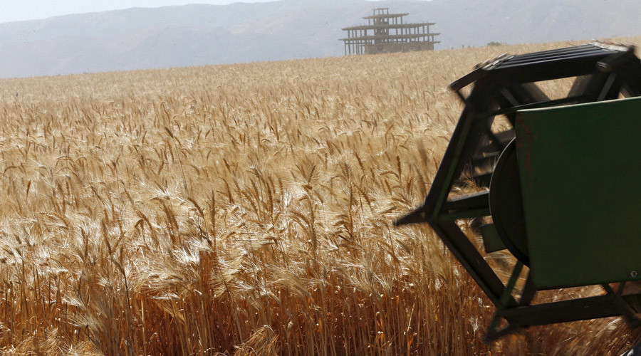 Russia to up grain production 25% by 2030 - Agriculture ministry