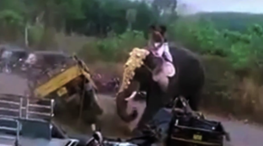 Trunk road rage: Angry elephant goes on epic rampage (VIDEO)