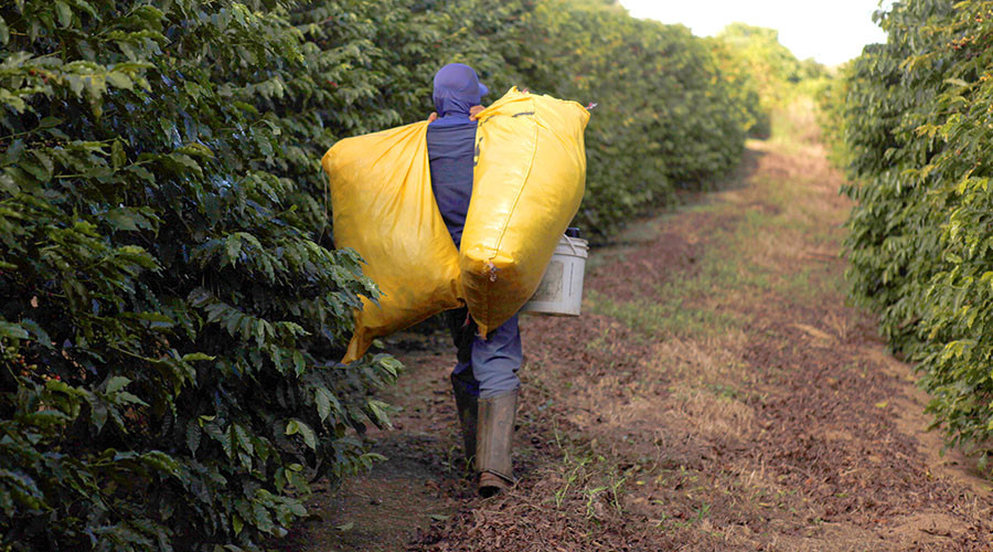 Nestle admits possibility of slave labor in its coffee supply chain