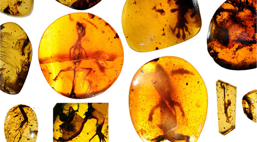 99-million-year-old fossilized lizard found in Asia, may be 'missing link' to 'lost world'