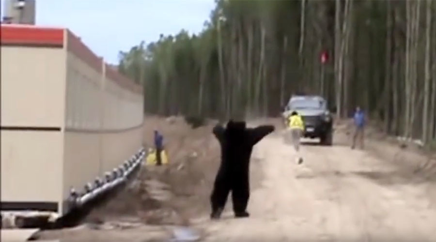 This may be the best bear prank of all time (VIDEO)