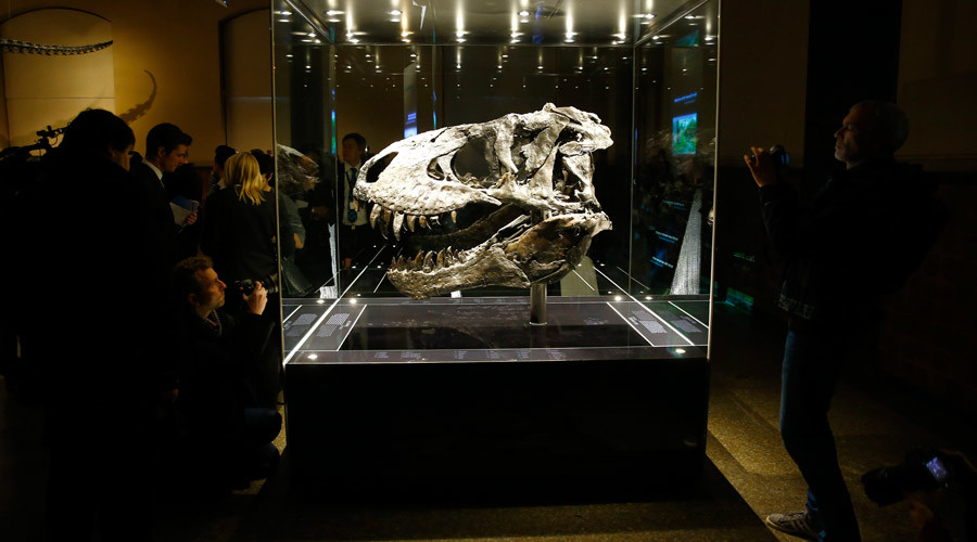 The original skull of a Tyrannosaurus rex skeleton is shown at the Natural History Museum in Berlin, Germany December 16, 2015. © Pawel Kopczynski