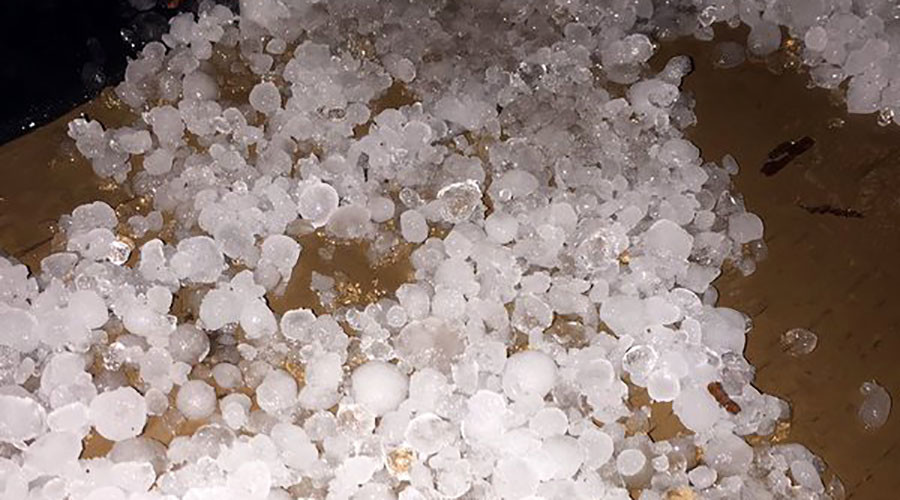Oh hail no: Hailstorm kills animals in Texas zoo