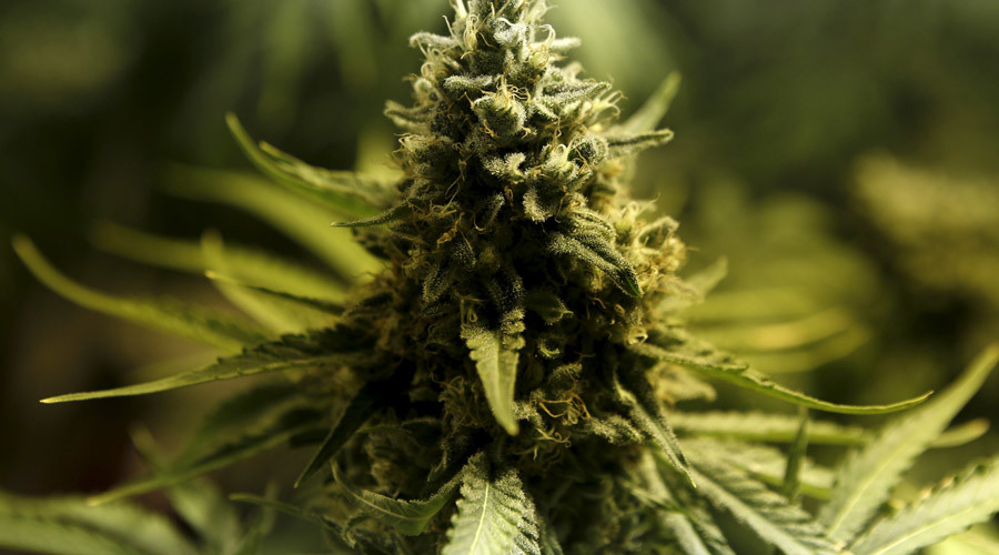 Keep us out of it: Supreme Court rejects states' case against Colo. pot legalization