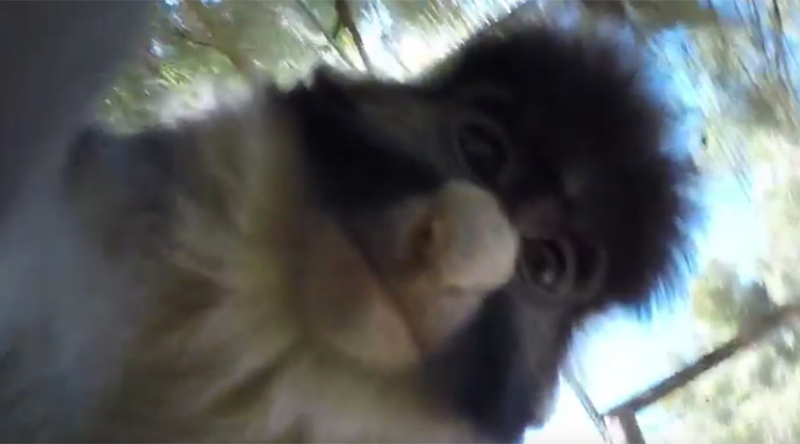 Cheeky monkey grabs camera, shoots short film & bags selfie (VIDEO)
