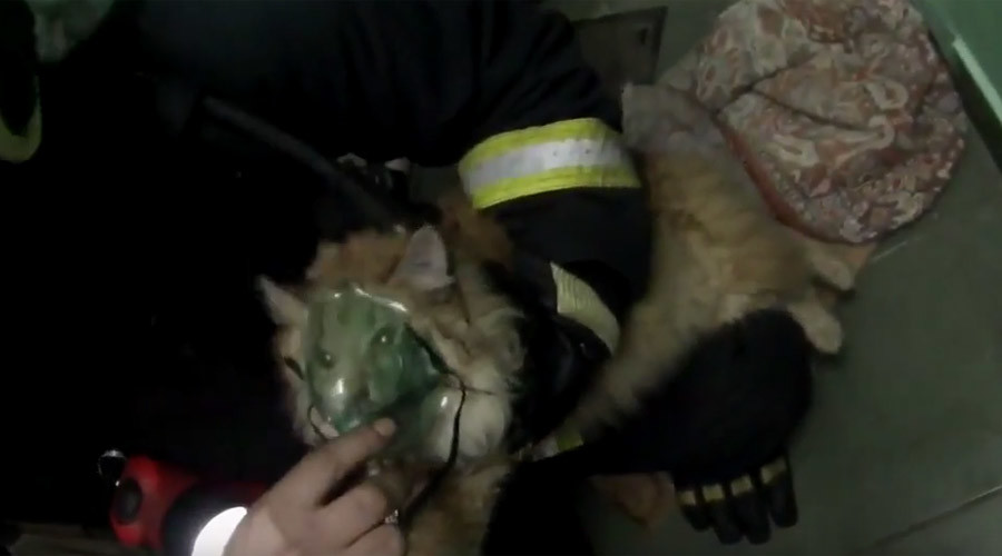 Cat mask fever: Kitty brought back to life by heroic Russian firefighters (VIDEO)