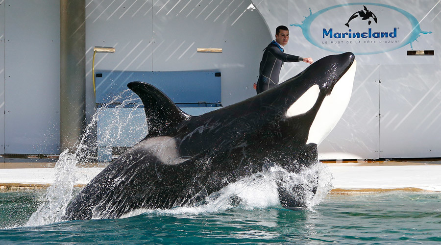 French marine park sued by activists over multiple animal deaths