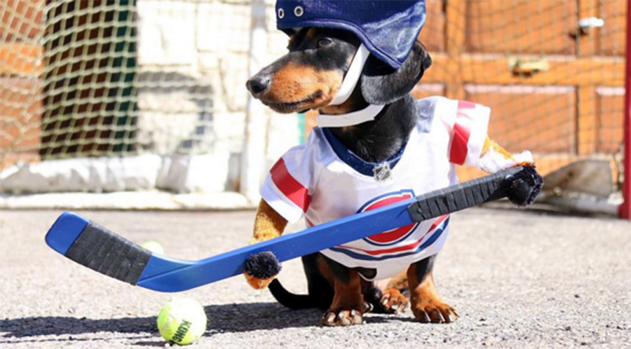 Canine hockey game goes viral as decked-out dogs face off (VIDEO)