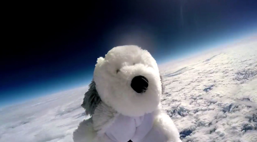 Lost in space? Missing 'astronaut' dog teddy sparks massive search (VIDEO)