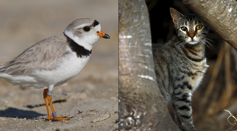 Feral cats vs. wild birds: Animal lovers to face off in federal court