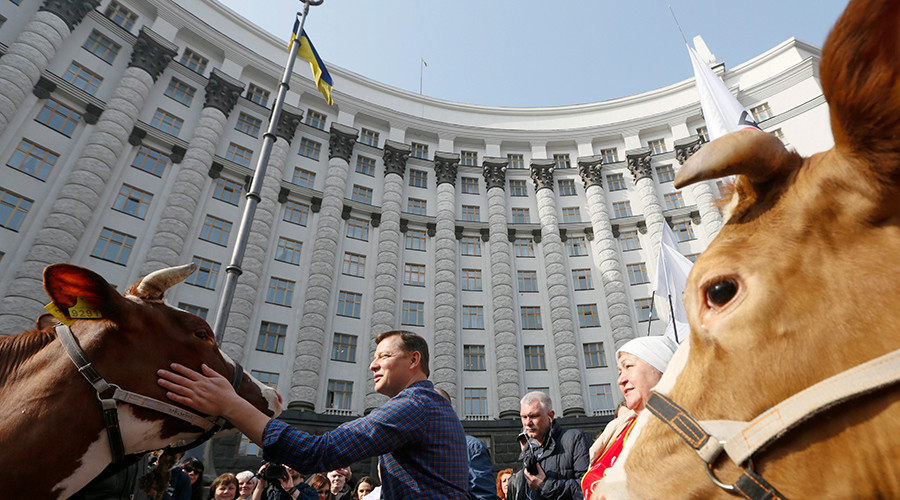 Milking it: Ukrainian populist right-wing politician brings cows to picket government (VIDEO)