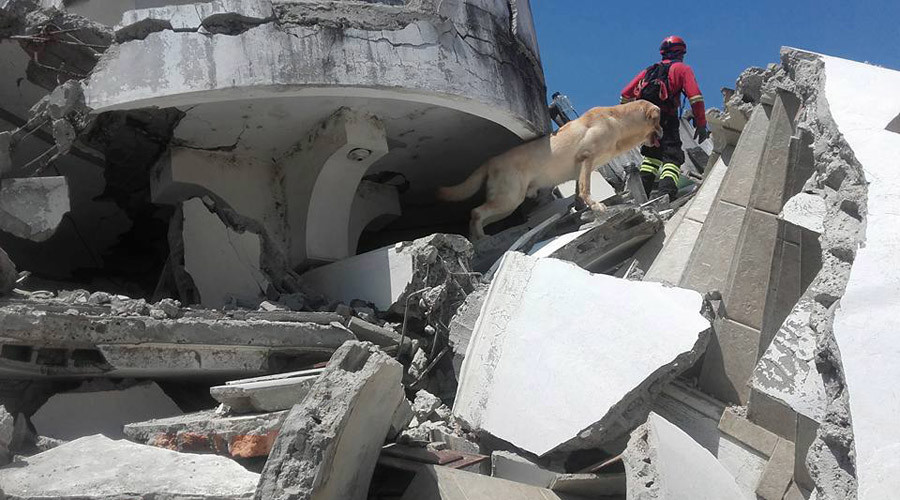 Heroic rescue dog dies after saving 7 lives in Ecuador quake search (PHOTOS, VIDEO)