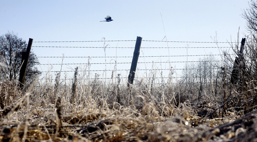 A magpie flies over a barbed wire fence at the 30 km (19 miles) exclusion zone around the Chernobyl nuclear reactor near the abandoned village of Babchin, Belarus. © Vasily Fedosenko