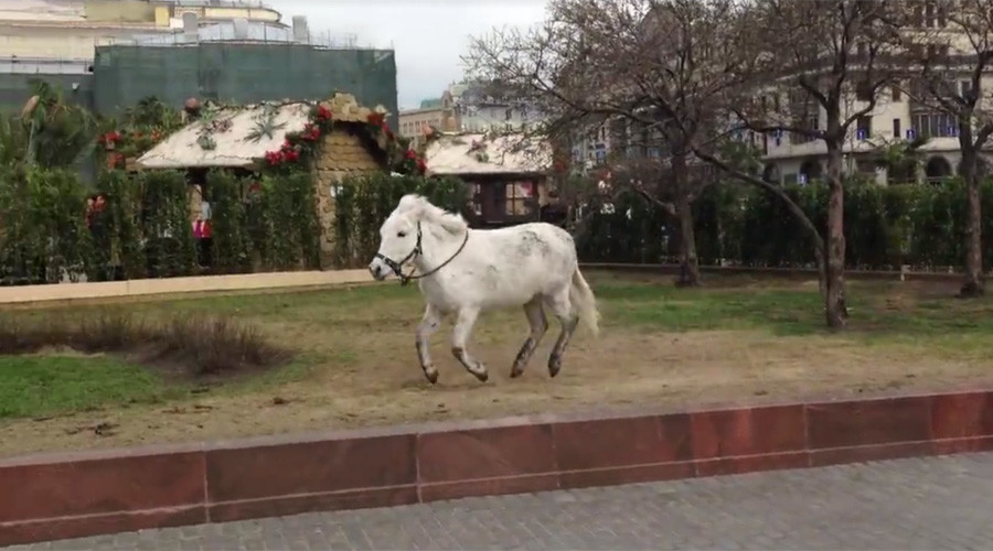 Hyper pony shows off moves outside Bolshoi Theater in Moscow (VIDEO)