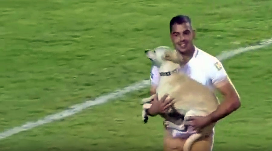 Pooch invasion: Fun-loving dog gives Mexican goalkeeper the run around (VIDEO)