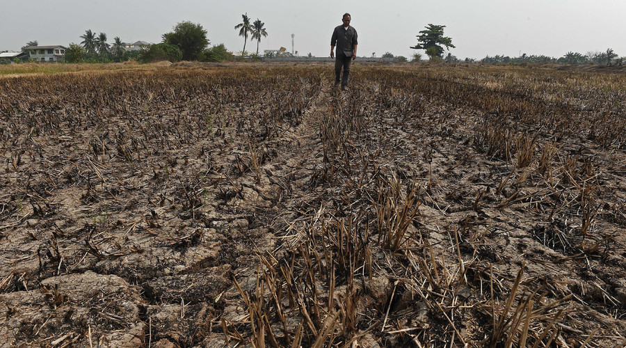 A farmer walking at his drought-hit rice field in Nonthaburi province outside Bangkok. © Christophe Archambault