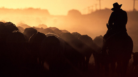 A farmer rides his horse as he herds his cattle towards stockyards near the outback Queensland town of Aramac, west of Brisbane, Australia © David Gray