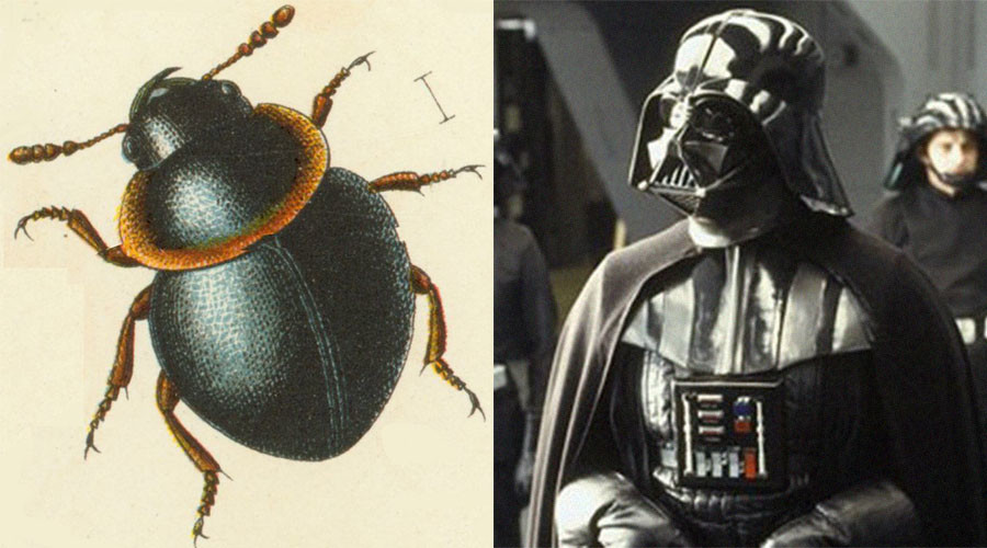 10 real life creatures named for fictional characters