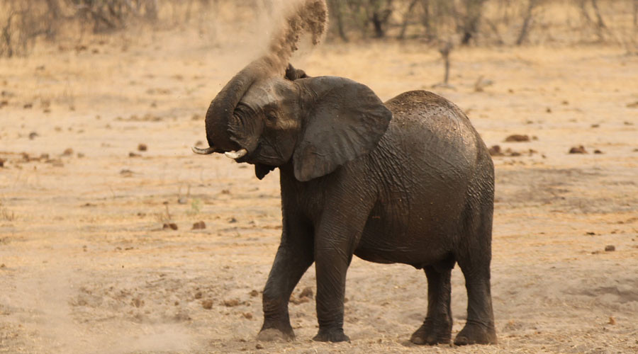 Harsh drought forces Zimbabwe to sell wildlife