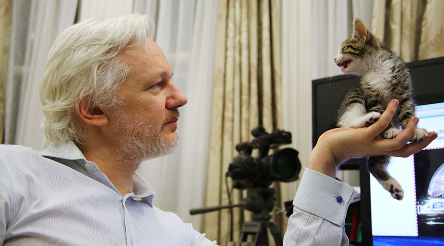 #Counterpurrveillance: WikiLeaks' Julian Assange reveals tiny kitten companion in embassy (PHOTO)