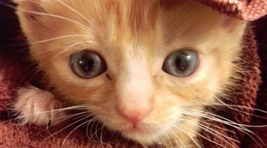 'We can rebuild him': Paralyzed kitten given bionic makeover using old toys (VIDEO)