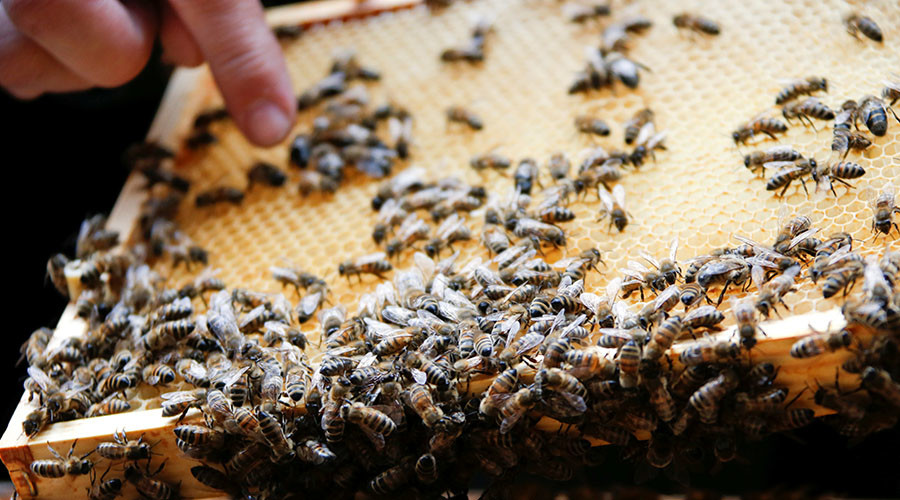 The US consumes $15 billion  worth of food pollinated by bees. © Fabrizio Bensch