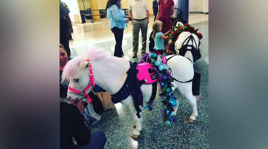Unicorns, clowns, & music: US airports struggle to ease frustration amid long TSA lines