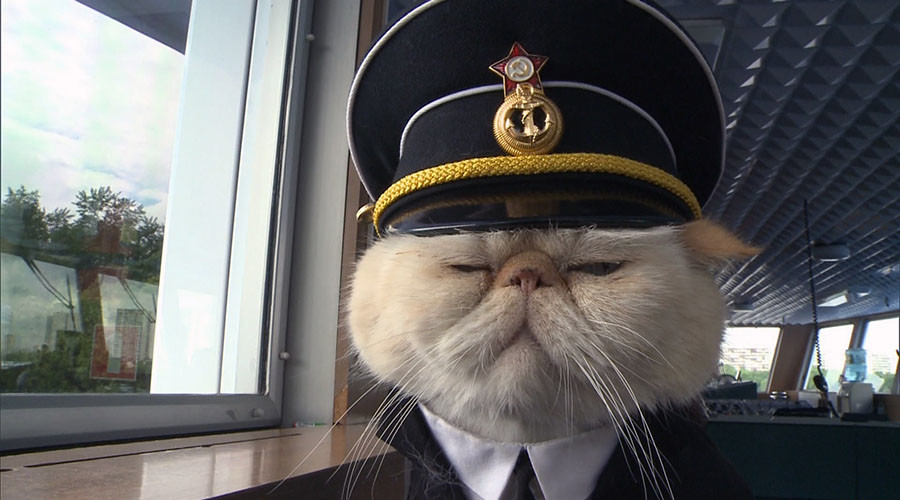 Russian sailor cats melt hearts of passengers cruising between Moscow and St. Petersburg (PHOTOS)