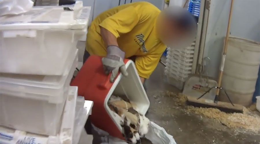 Feds, PETA find animals frozen alive, gassed, sick at pet dealer (VIDEO)