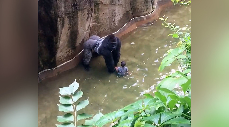 'Accidents happen,' says mother of child who fell into Cincinnati Zoo gorilla enclosure