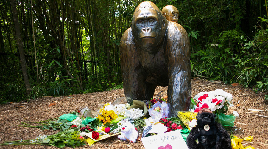 Criminal charges possible amid public outcry over Cincinnati gorilla death