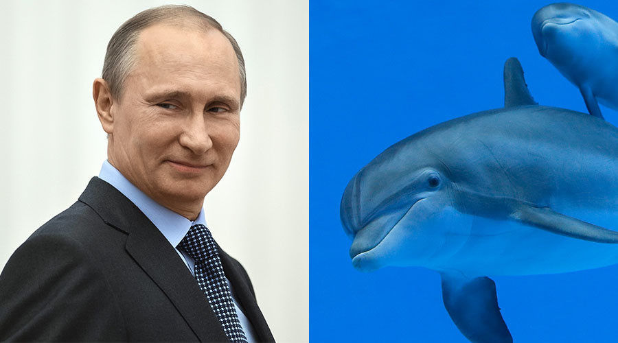 Who needs evidence? Putin teams up with dolphins for world domination (apparently)