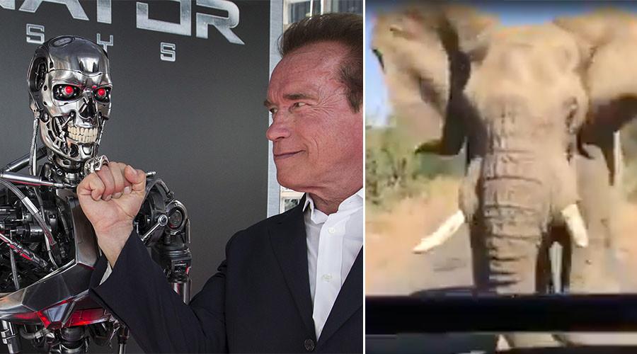 Arnold Schwarzenegger captures close encounter with enraged elephant on safari (VIDEO)
