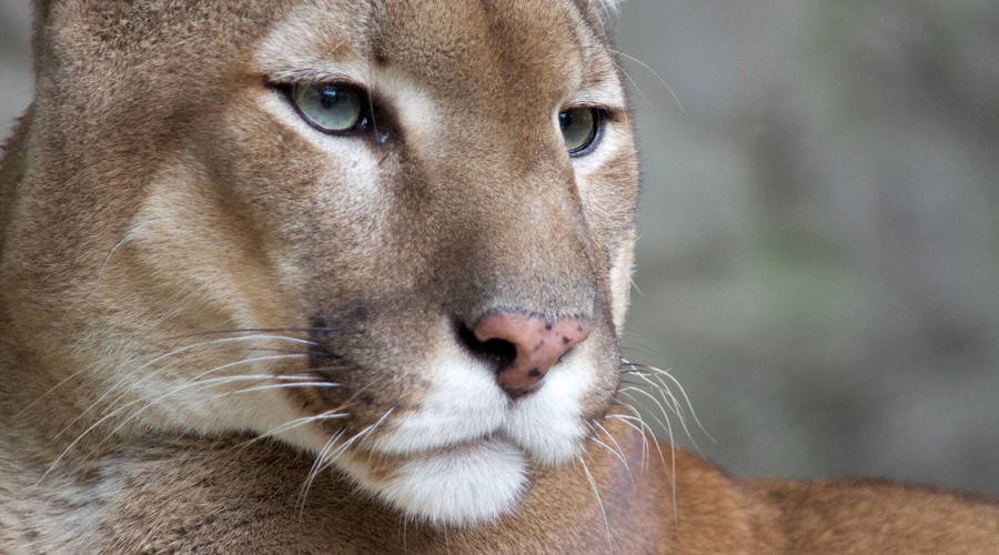 Mom fights off mountain lion to save young son, suffers barely a scratch