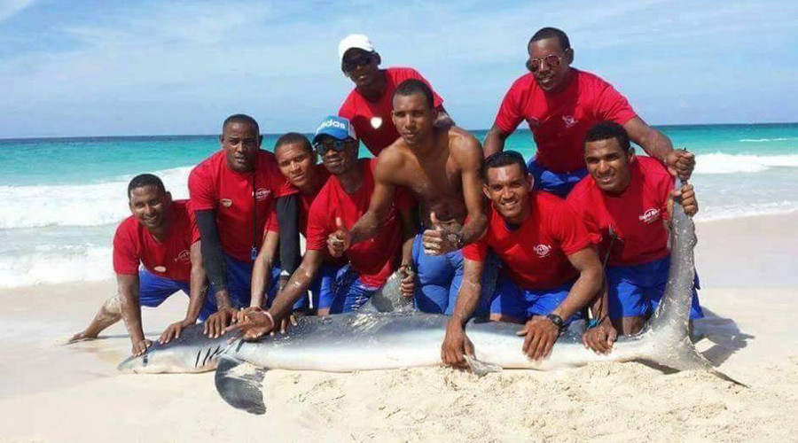 Shark dies after lifeguards & tourists drag it out of sea for photos (VIDEO, PHOTOS)