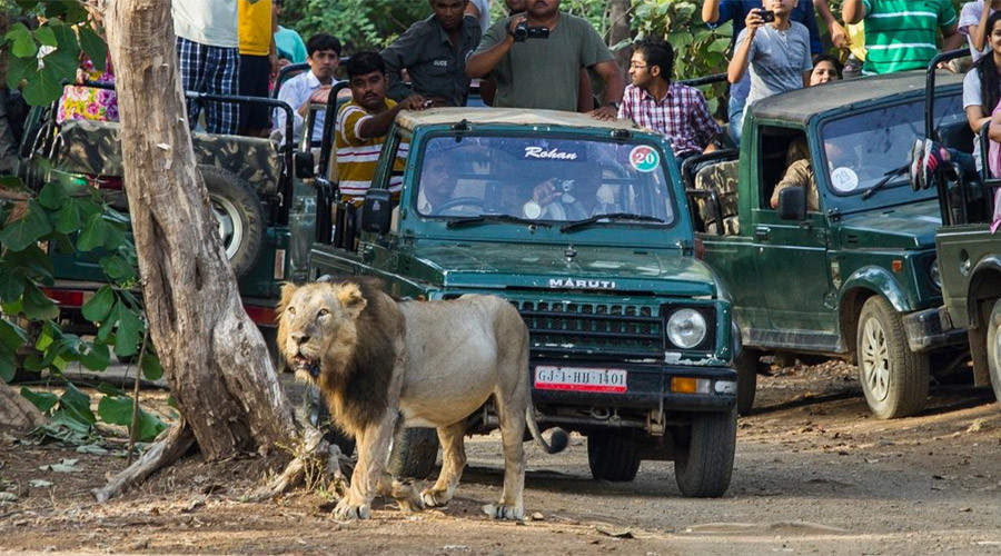 Man-eaters: 3 lions given 'life sentence' in India after killing & eating humans