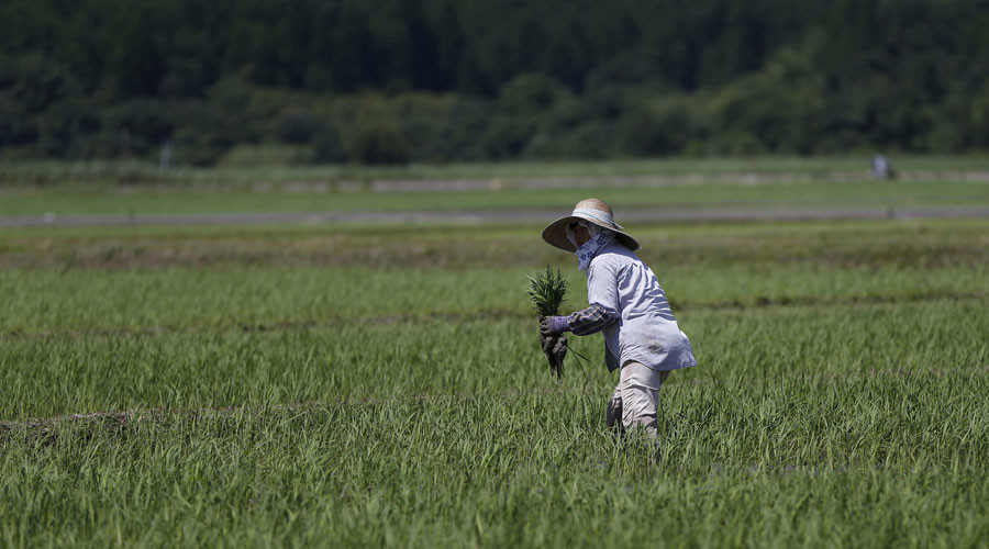 Fukushima rice to be sold in Britain