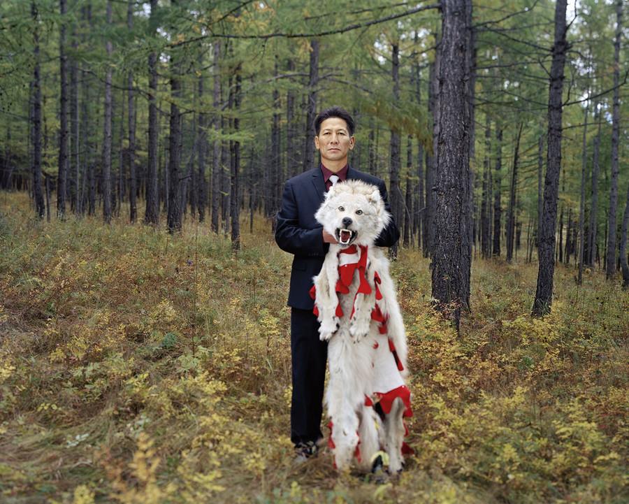 Buree and a wolf in Ulaanbaatar, Mongolia.