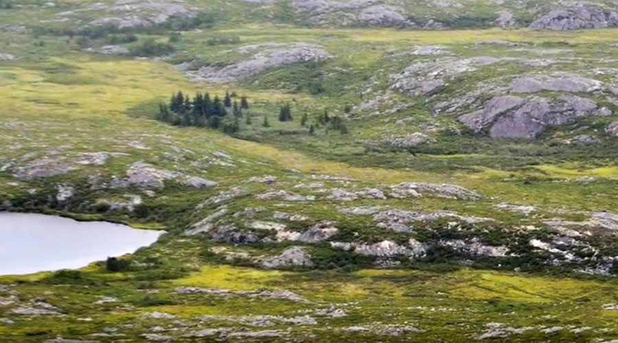Earth going greener: Human activity boosts vegetation growth in cold regions