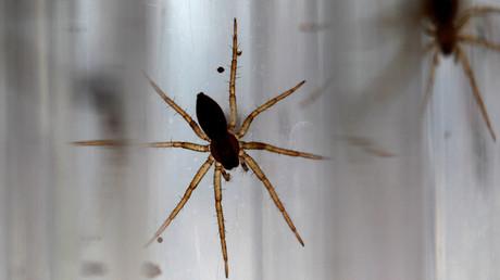 Baby fen raft spiders © Phil Noble