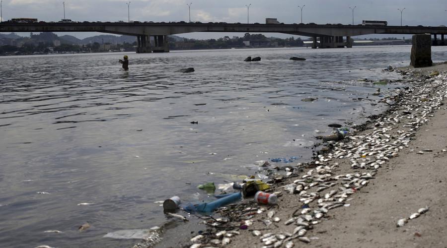 Dead fish lie on the shore of Guanabara Bay in Rio de Janeiro, Brazil January 13, 2016. © Ricardo Moraes