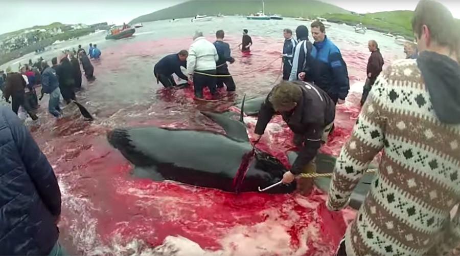 © Sea Shepherd