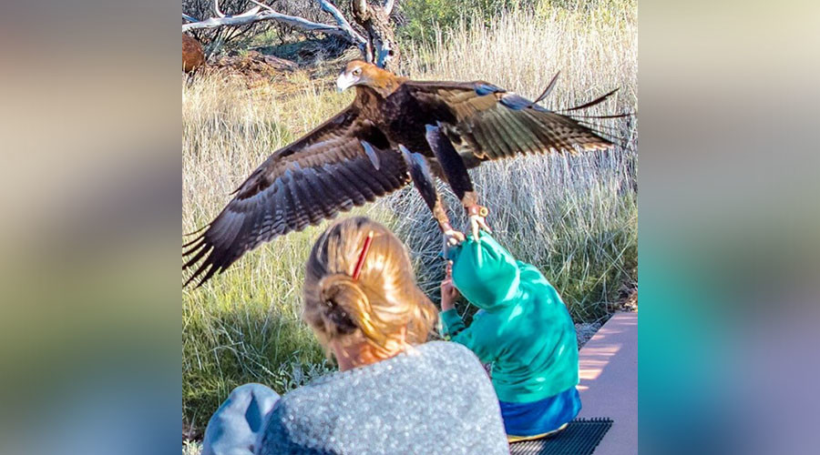 Terrifying moment huge eagle tries to snatch boy caught on camera (PHOTO)