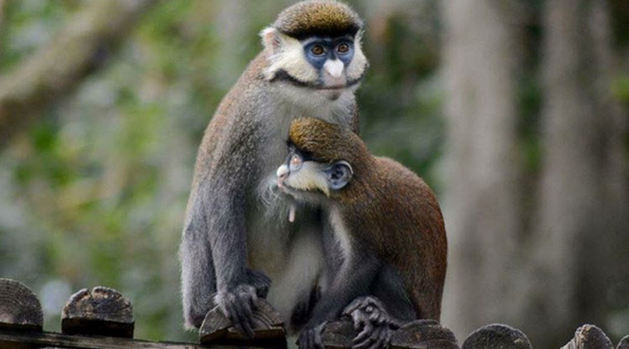 Dogs kill 3 monkeys in night-time raid on Louisiana zoo