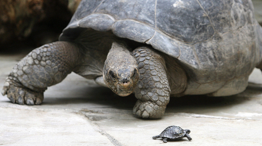 Turtle didn't develop shells for protection, but for digging – research