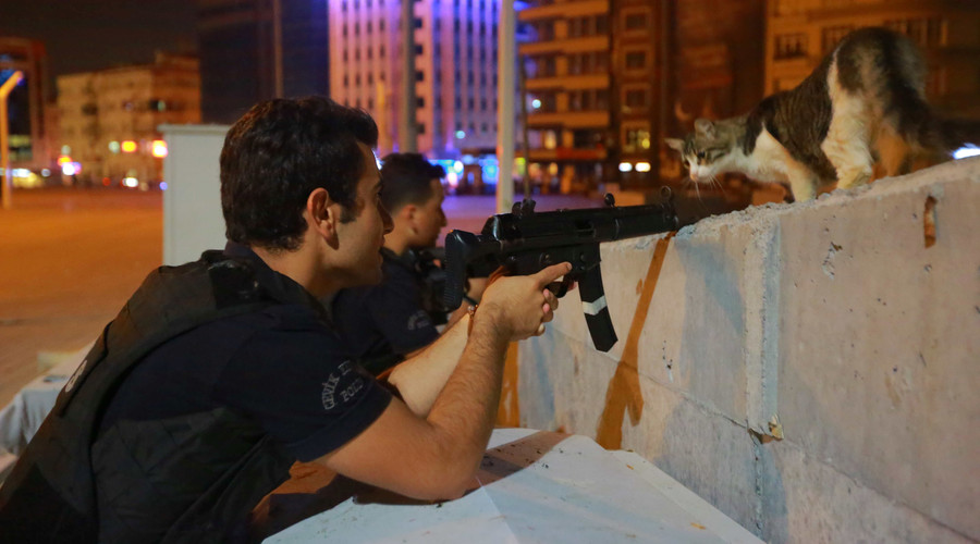 A cat looks on as a policeman aims his weapon during an attempted coup, in Istanbul, Turkey July 16, 2016. © Kemal Aslan