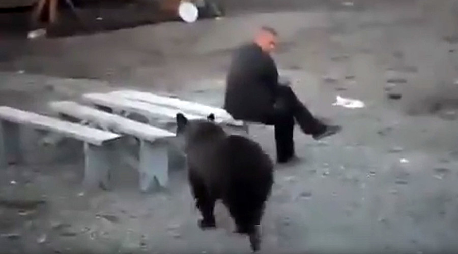 Russian man doesn't give a damn about bear roaming nearby (VIDEO)