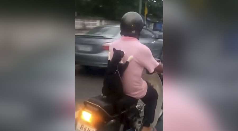 Feline cat-ching ride on back of scooter is best thing you'll see today (VIDEO)
